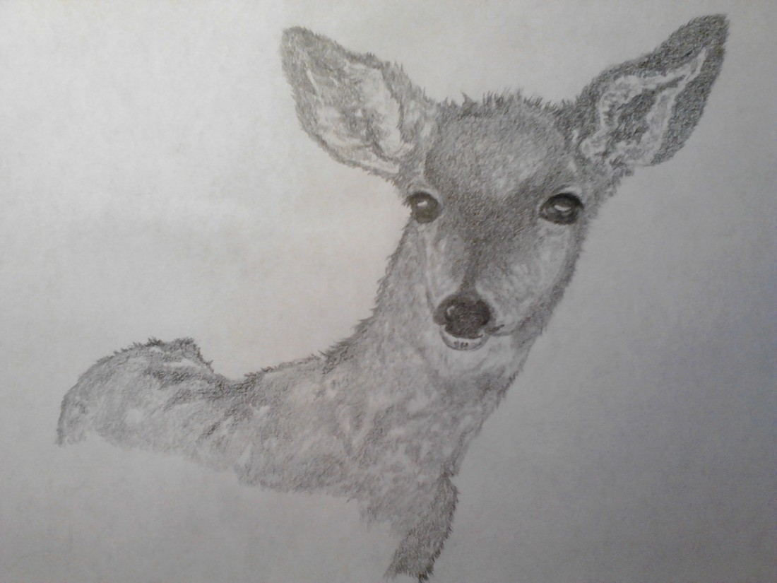 Baby Deer drawing on A4 paper