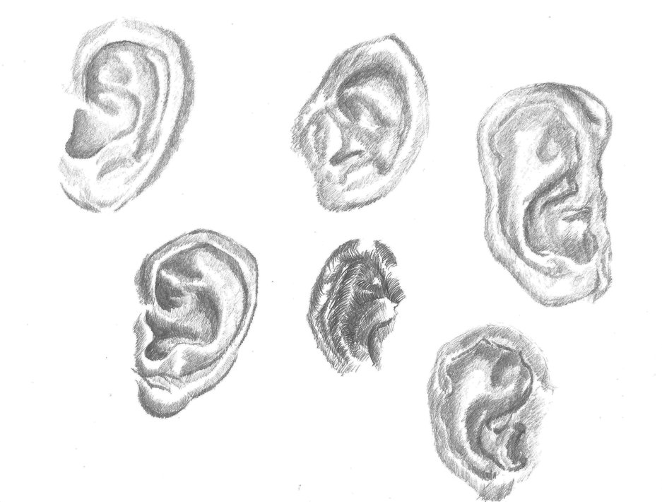 drawing of ears drawing on A4 paper
