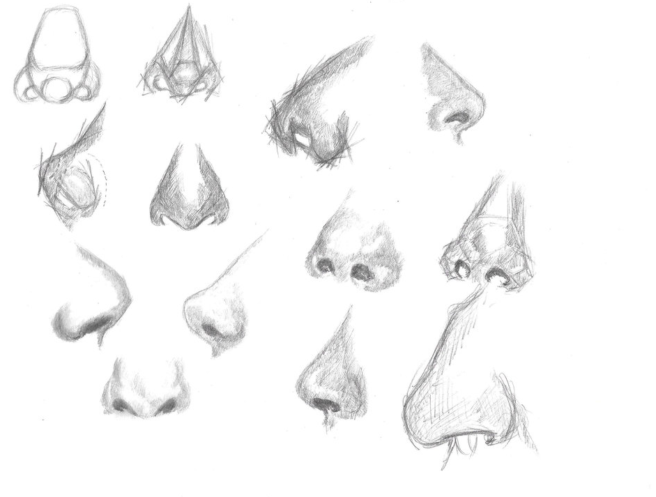 Human Anatomy Noses drawing on A4 paper