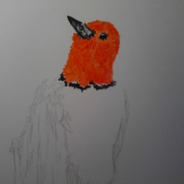 Red Headed Woodpecker preview 03 watercolor painting on A3 paper