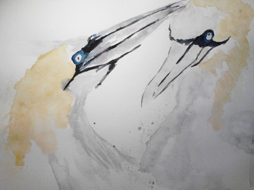 Painting of Two Gannets, watercolor painting on watercolor paper