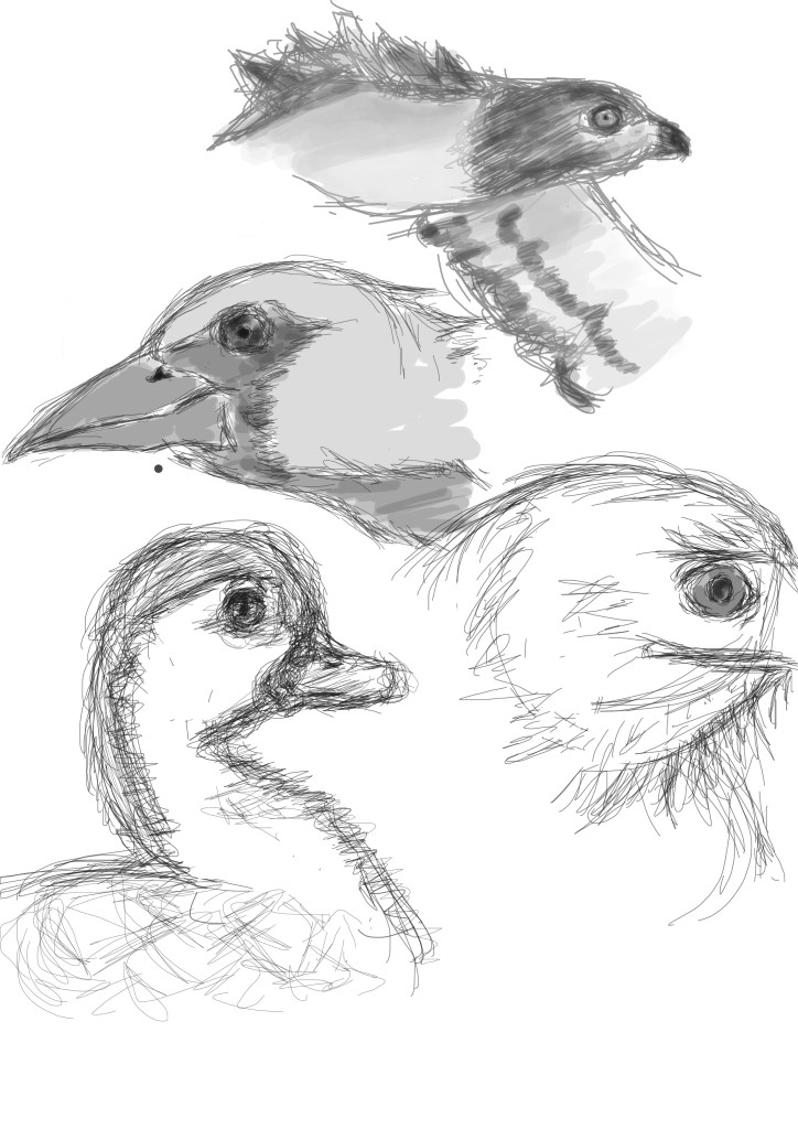Sketches of birds illustration on photoshop