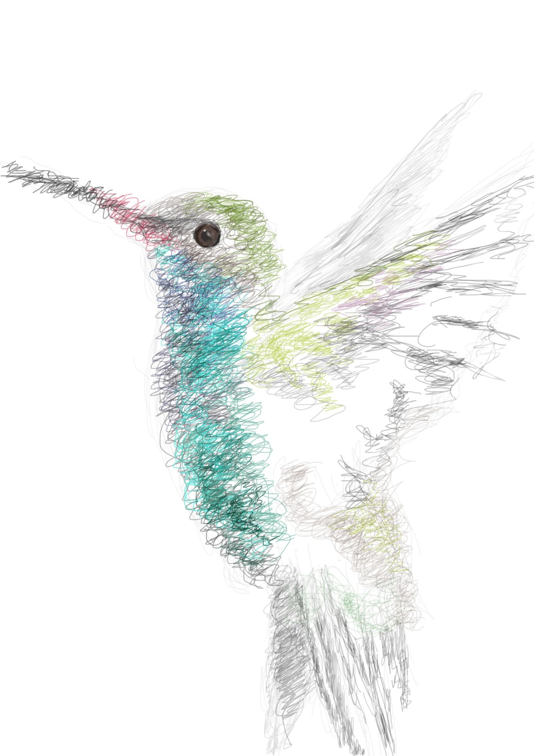 Linework - Hummingbird illustration on photoshop