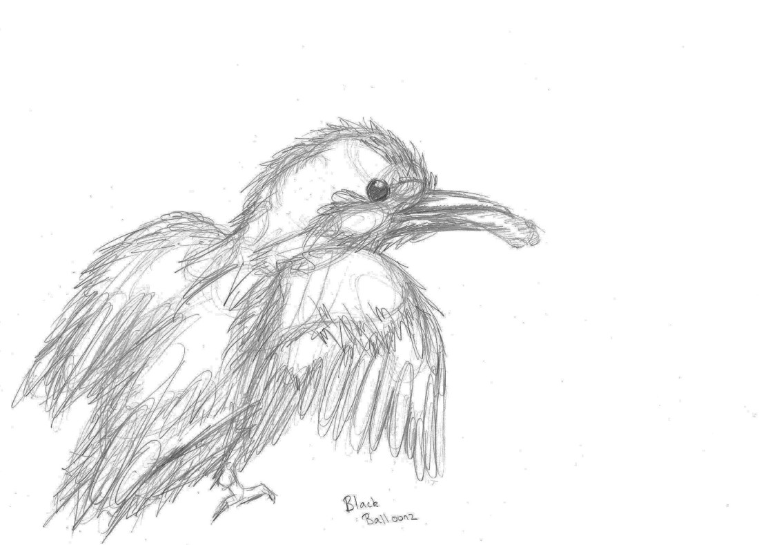 drawing kingfisher on A4 paper