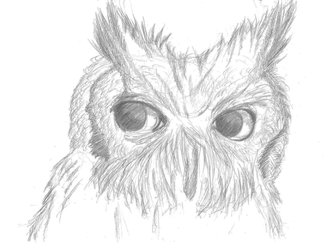 drawing of an owl drawing on A4 canson paper
