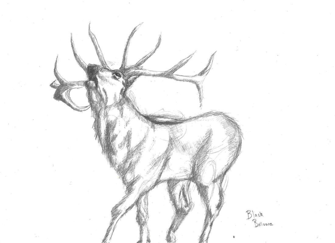 reindeer drawing on A4 paper