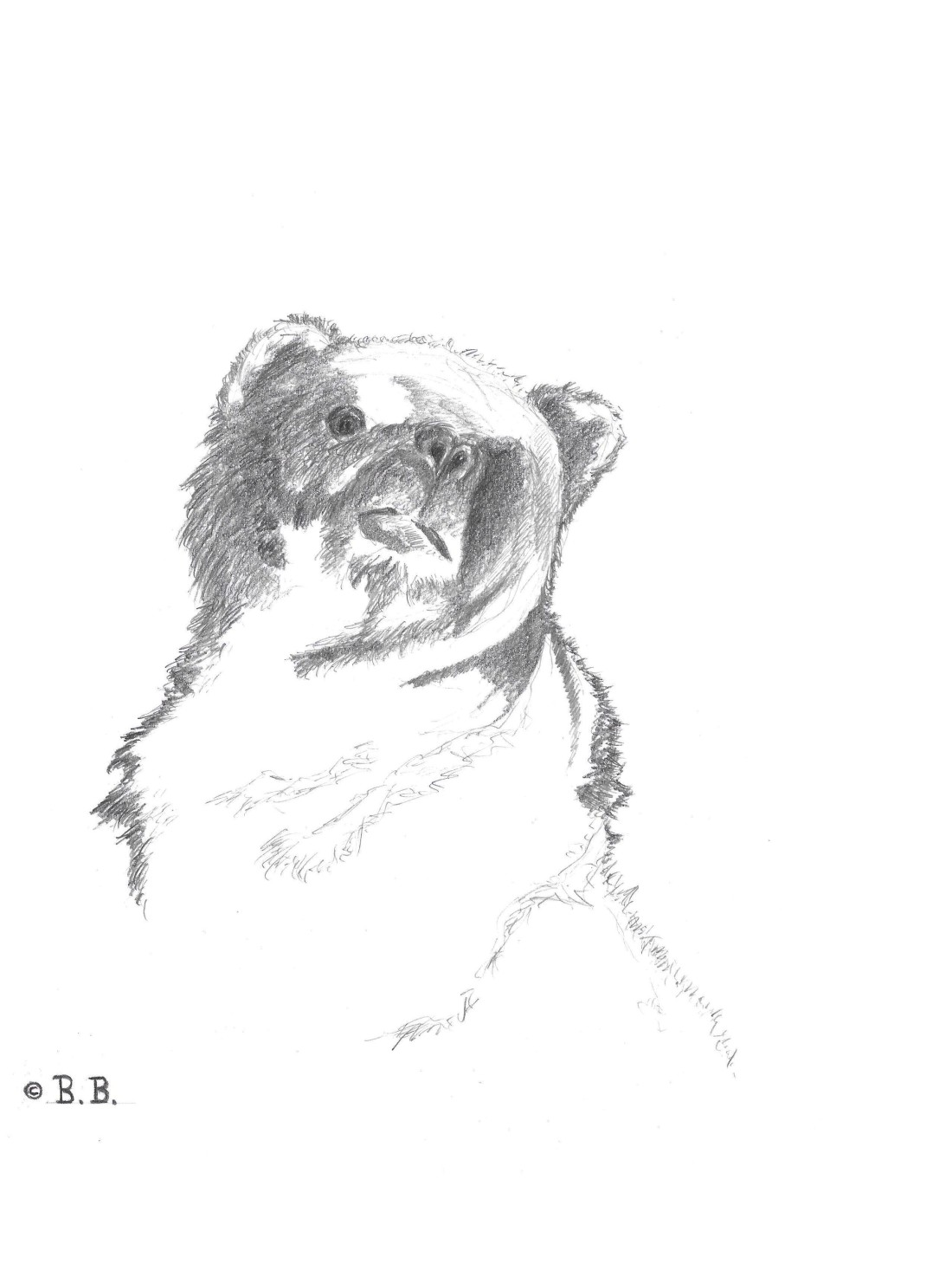 bear looking up drawing on A4 paper
