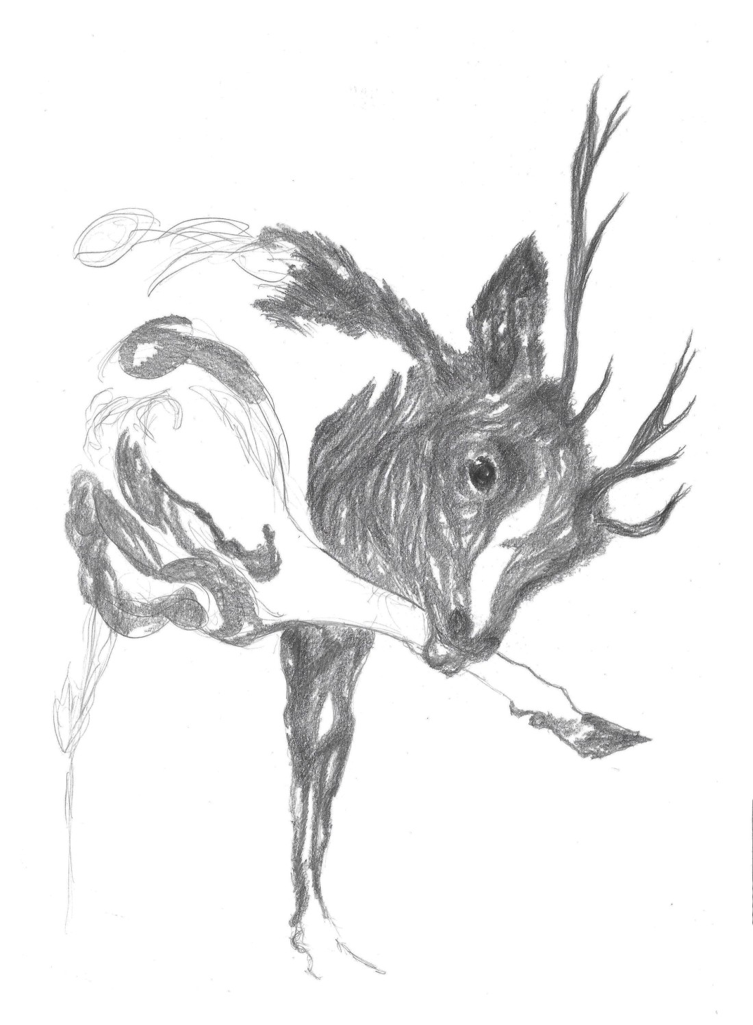 Deer linking is leg drawing on A4 paper