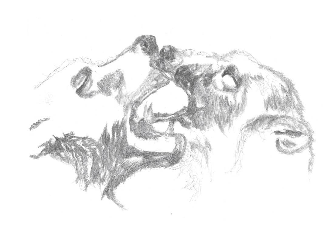 two bears drawing on A4 paper