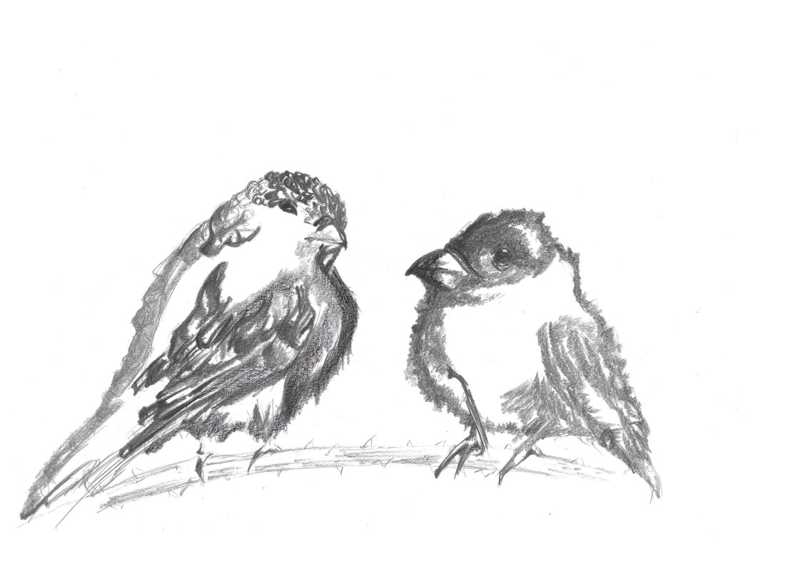 two-birds-sitting-on-a-branch-drawing_blackballoonz