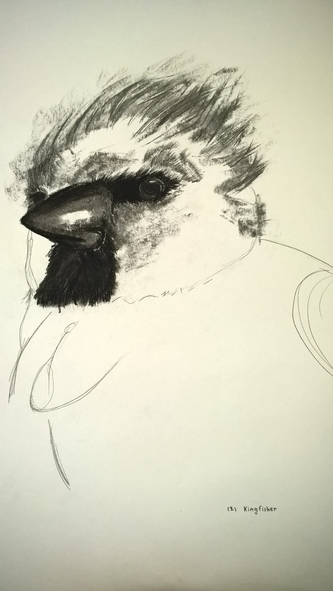 unfinished-Charcoal Kingfisher drawing on A3 paper