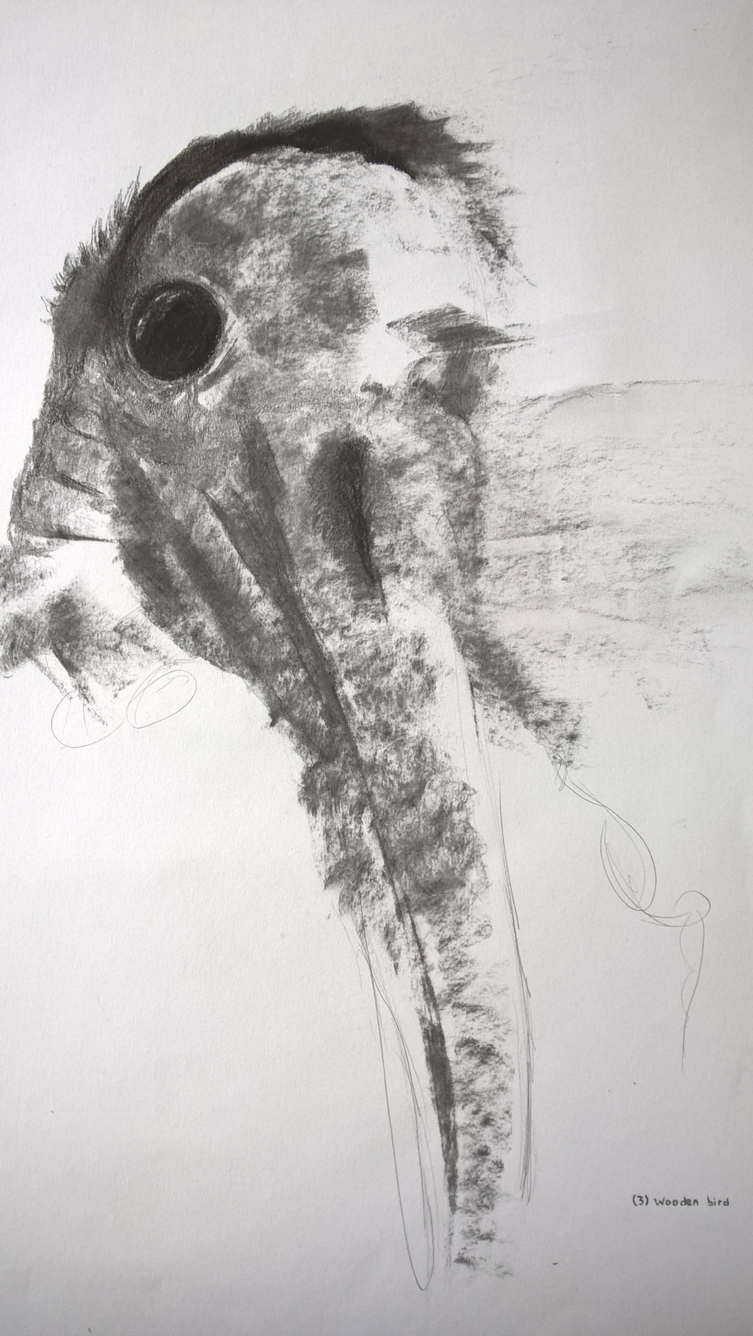 Unfinished - charcoal - bird drawing on A3 paper