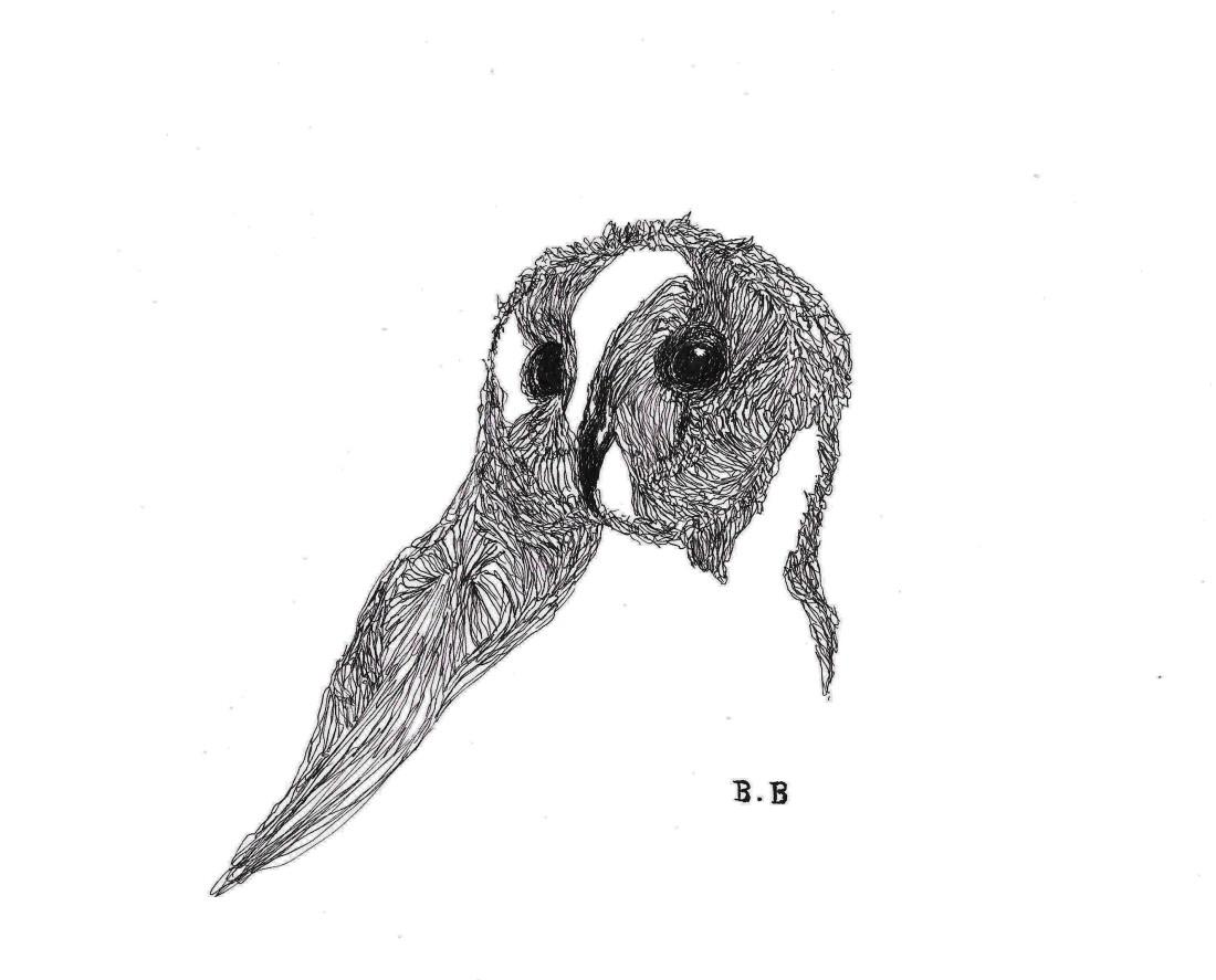 Uninished ink owl #1 illustration on A4 paper